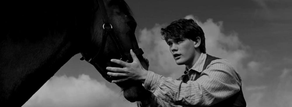 Το παρ-άλογο του πολέμου...