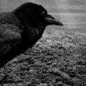 """""""Το Βαμμένο Πουλί"""": ένα οδοιπορικό στο σκοτάδι της ανθρώπινης υπόστασης και τη βαναυσότητα του πολέμου"""